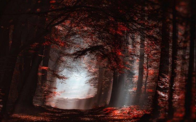 Desktop Wallpaper Fall Leaves Landscape Nature Atmosphere Forest Mist Sun Rays