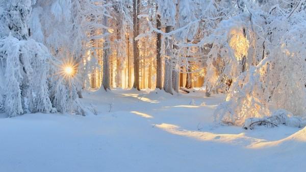 sunrise winter nature forest