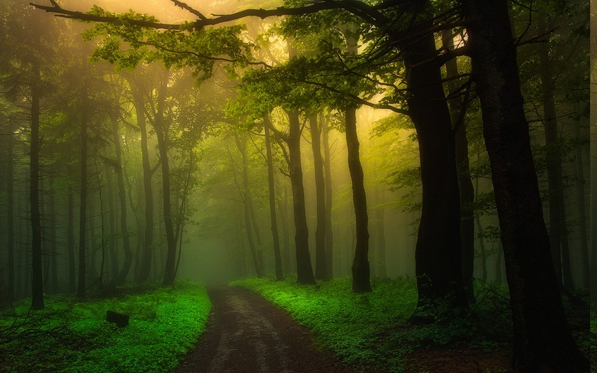 Full Hd Love Wallpapers For Mobile Nature Landscape Dirt Road Mist Forest Sunrise Path