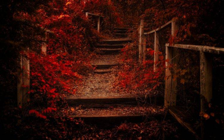 Fall Leaves Pathway Computer Wallpaper Nature Landscape Fall Path Leaves Shrubs Red Fence
