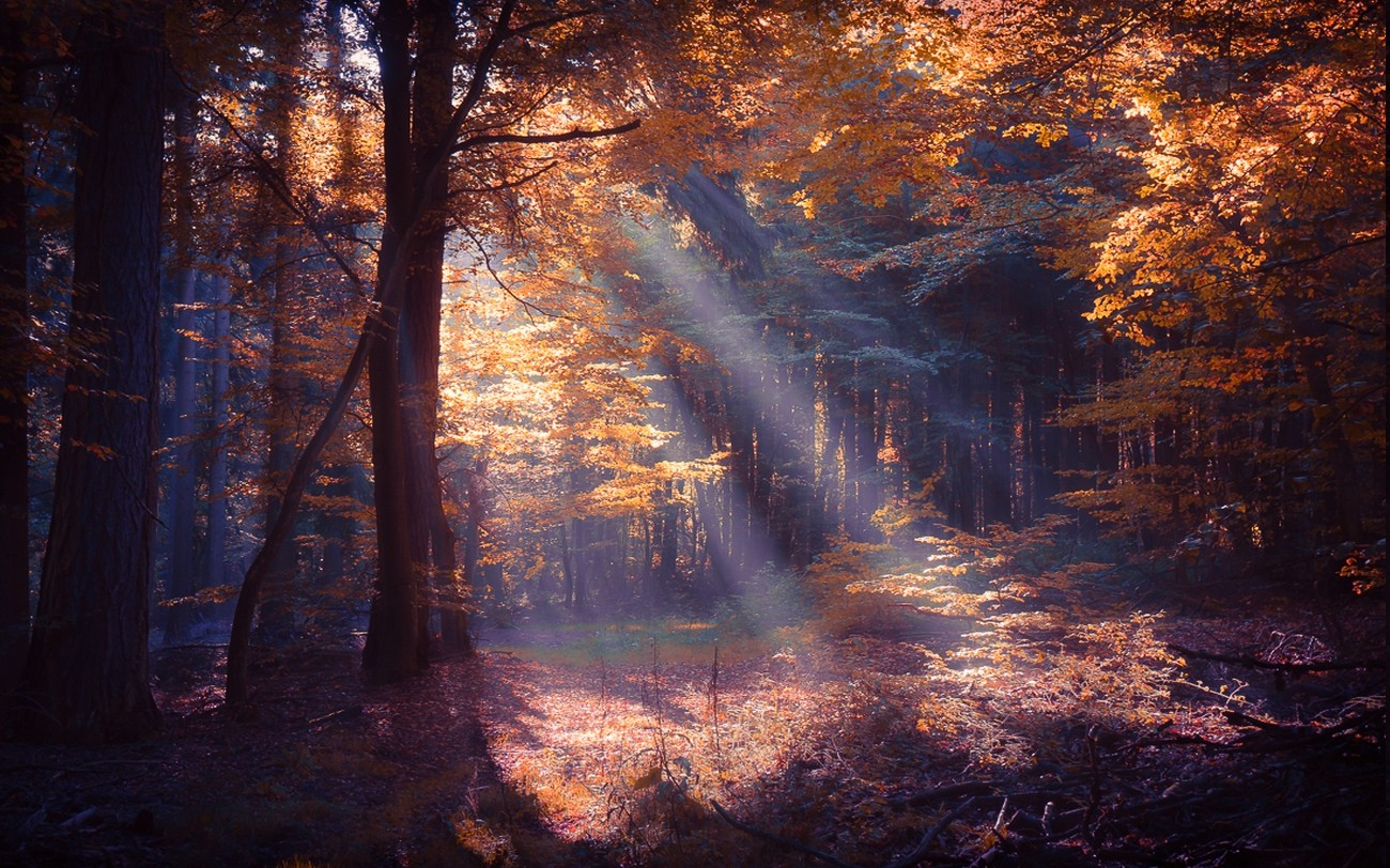 Fall Leaves Wallpaper For Desktop Nature Landscape Forest Sun Rays Colorful Mist Fall