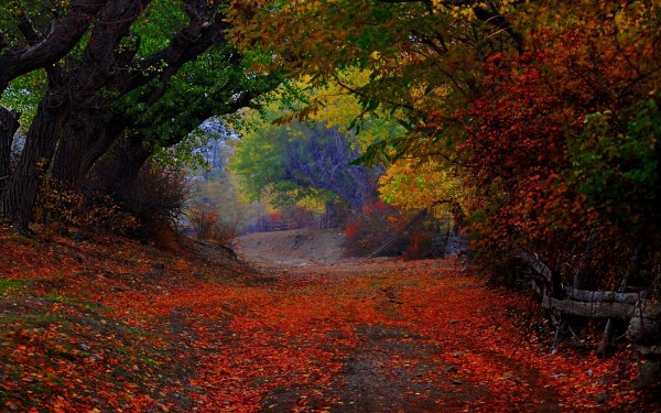 nature landscape colorful path