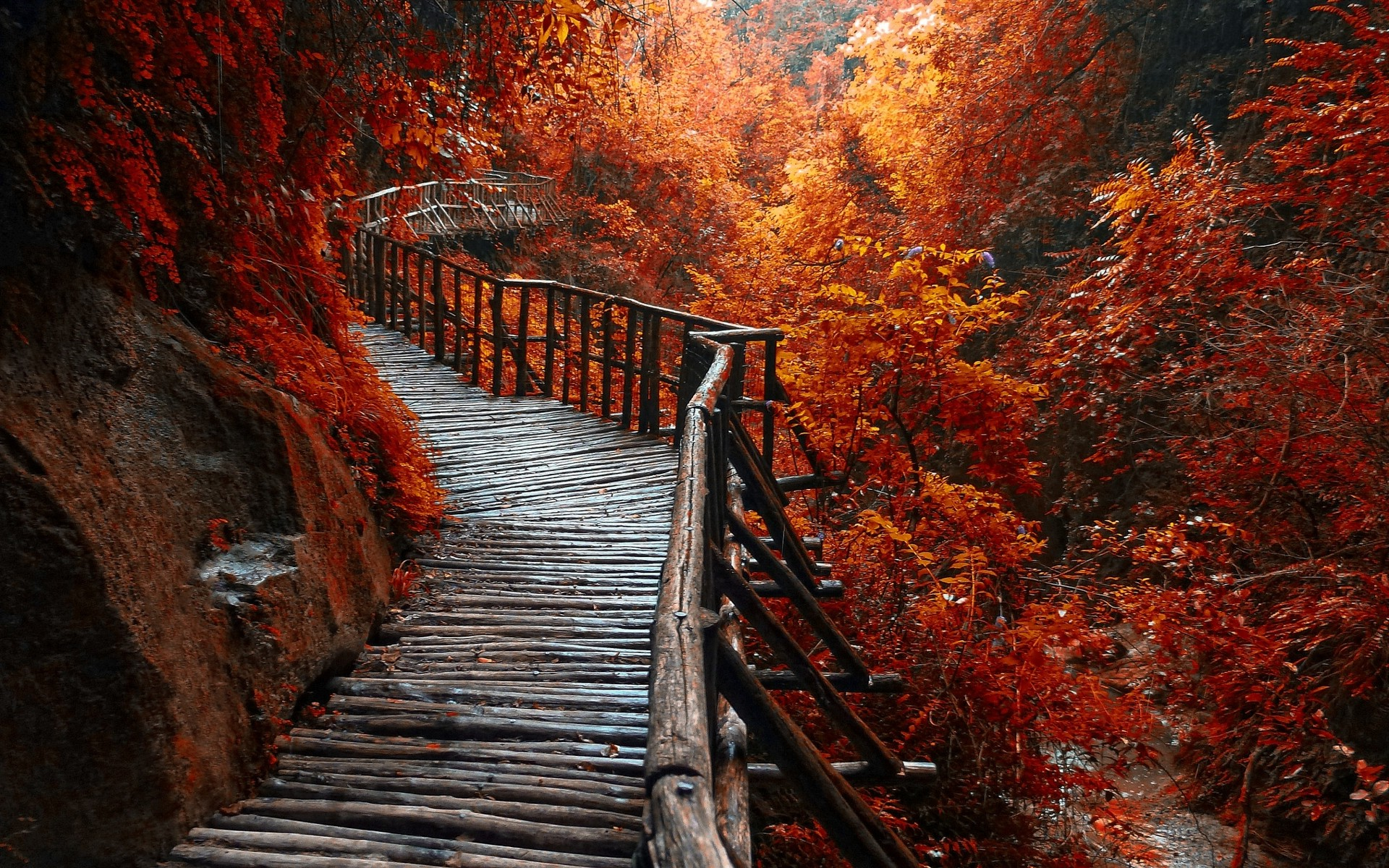 Fall Leaves Pathway Computer Wallpaper Nature Landscape River Forest Fall Walkway Path