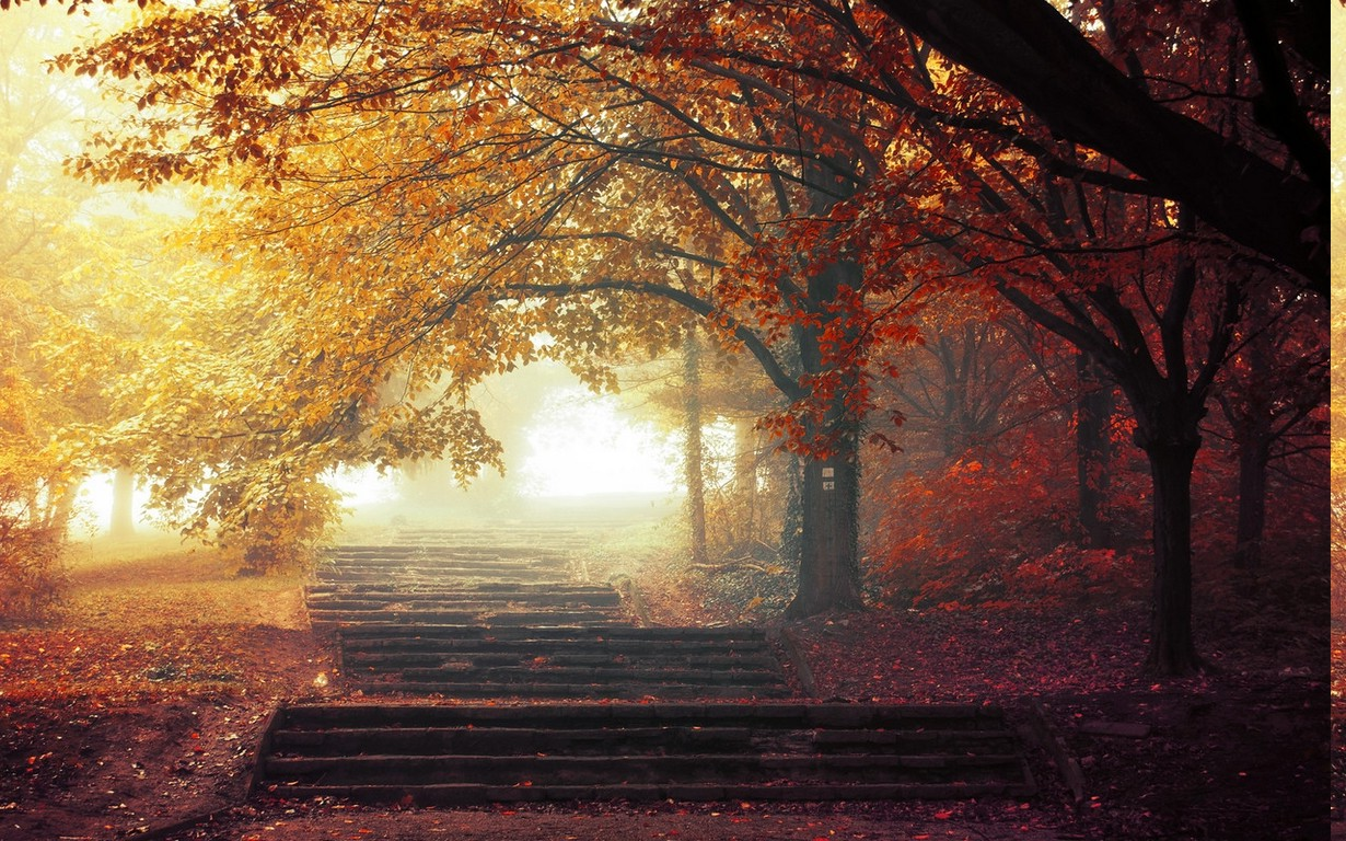 The Fall Movie Wallpaper Nature Landscape Mist Trees Fall Path Leaves Park