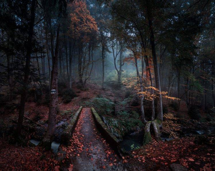 Foggy Fall Wallpaper Nature Landscape Forest Path Fall Leaves Bulgaria