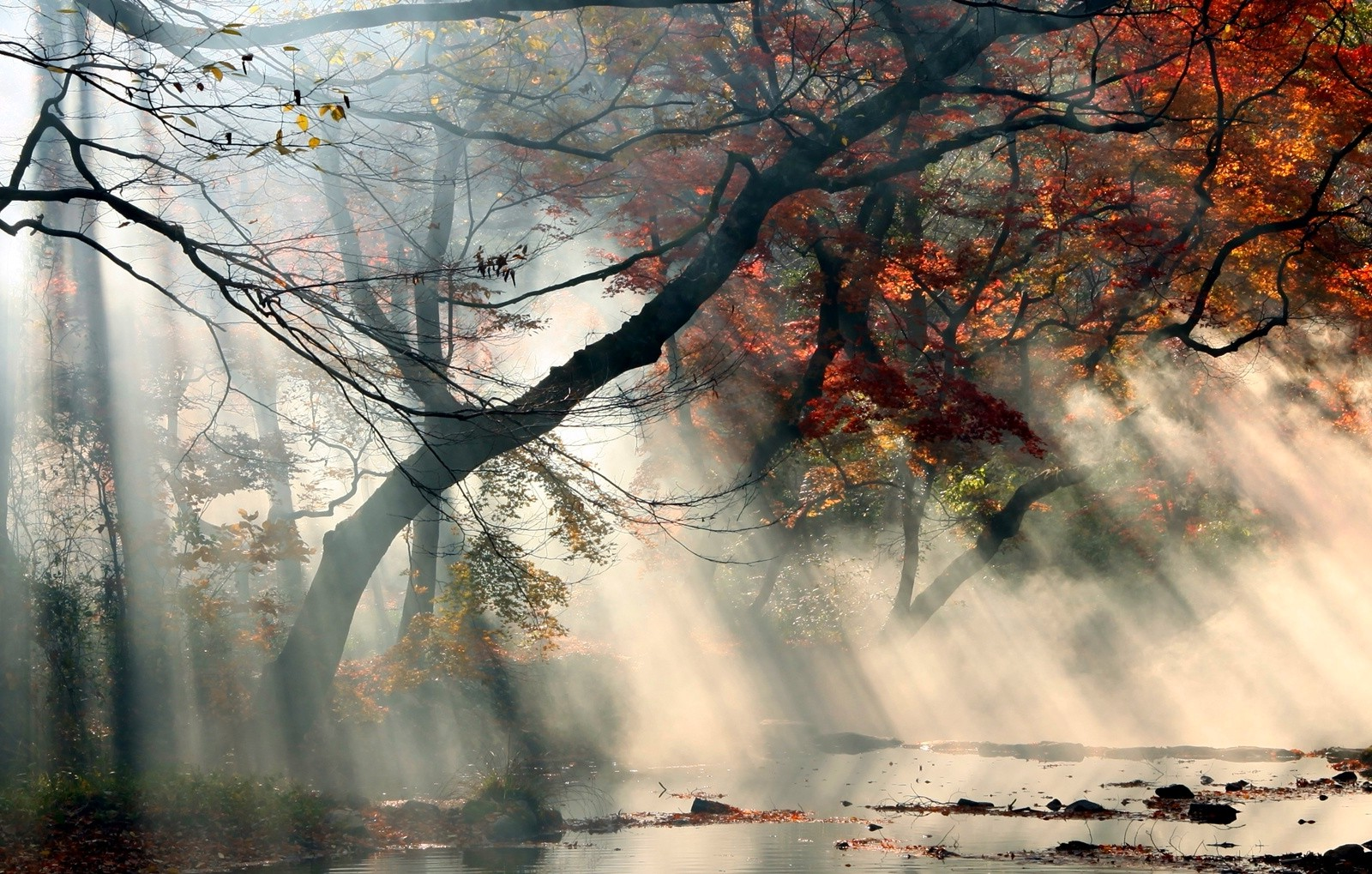 Fall Wallpaper Water Nature Landscape Sunrise Mist Sun Rays Fall Trees