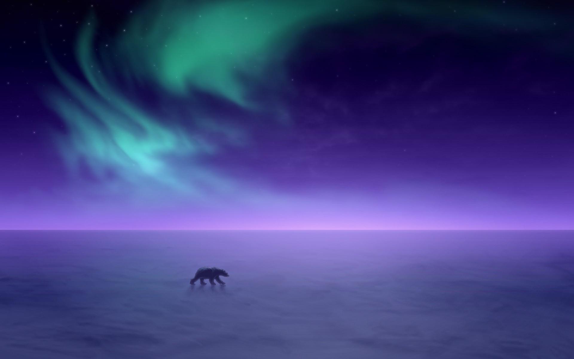Sky Polar Bears Landscape Snow Horizon Wallpapers HD