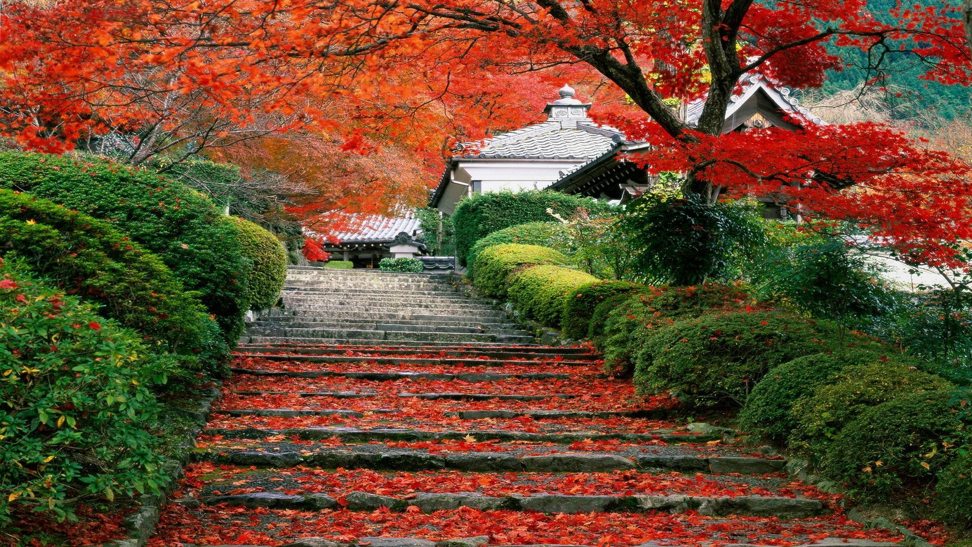 Autumn Tree Leaf Fall Animated Wallpaper Japan Landscape Fall Cherry Trees Stairs Leaves