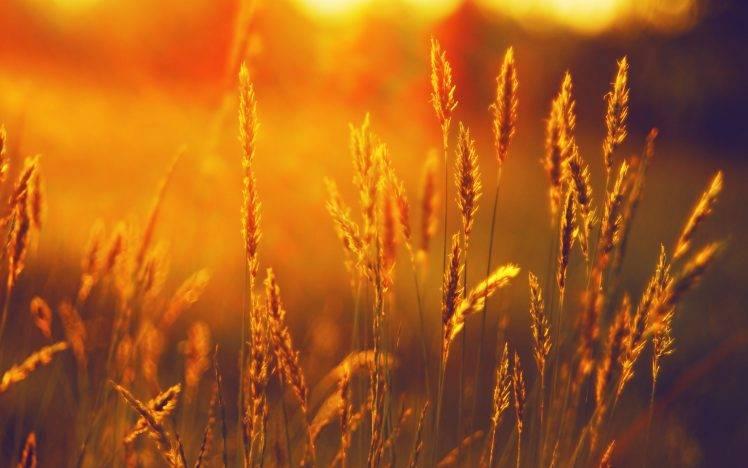 Fall Harvest Wallpaper 1024x768 Landscape Summer Field Wheat Sunset Wallpapers Hd