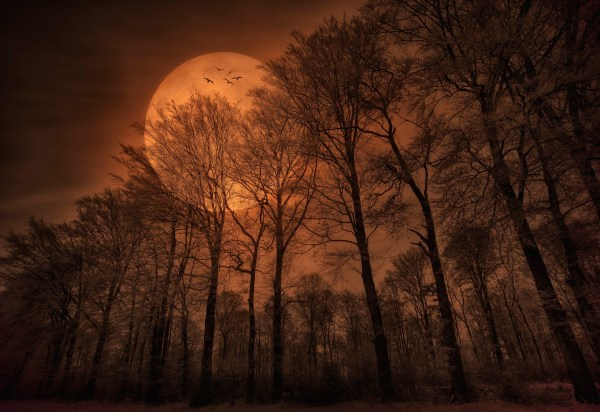 nature forest trees moon monochrome