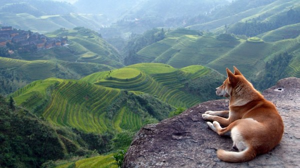 dog terraced field landscape