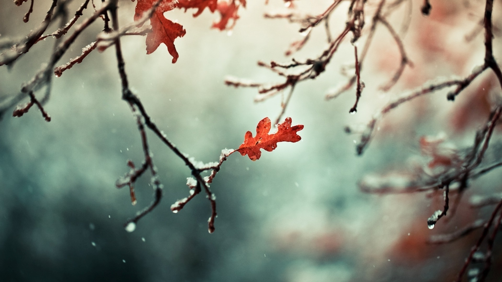 Frosty Fall Leaves Wallpaper Winter Nature Photography Leaves Wallpapers Hd