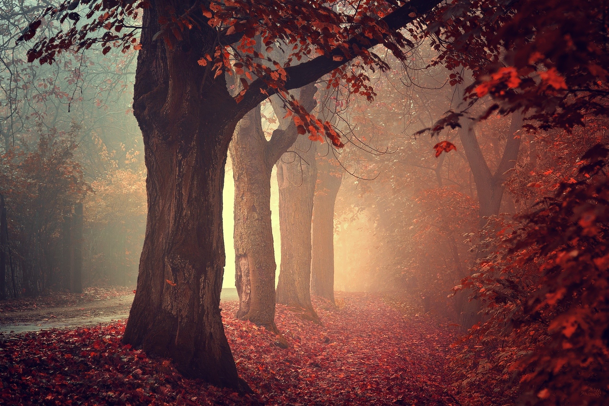 Autumn Falling Leaves Wallpaper Nature Trees Fall Leaves Red Path Mist Forest Red