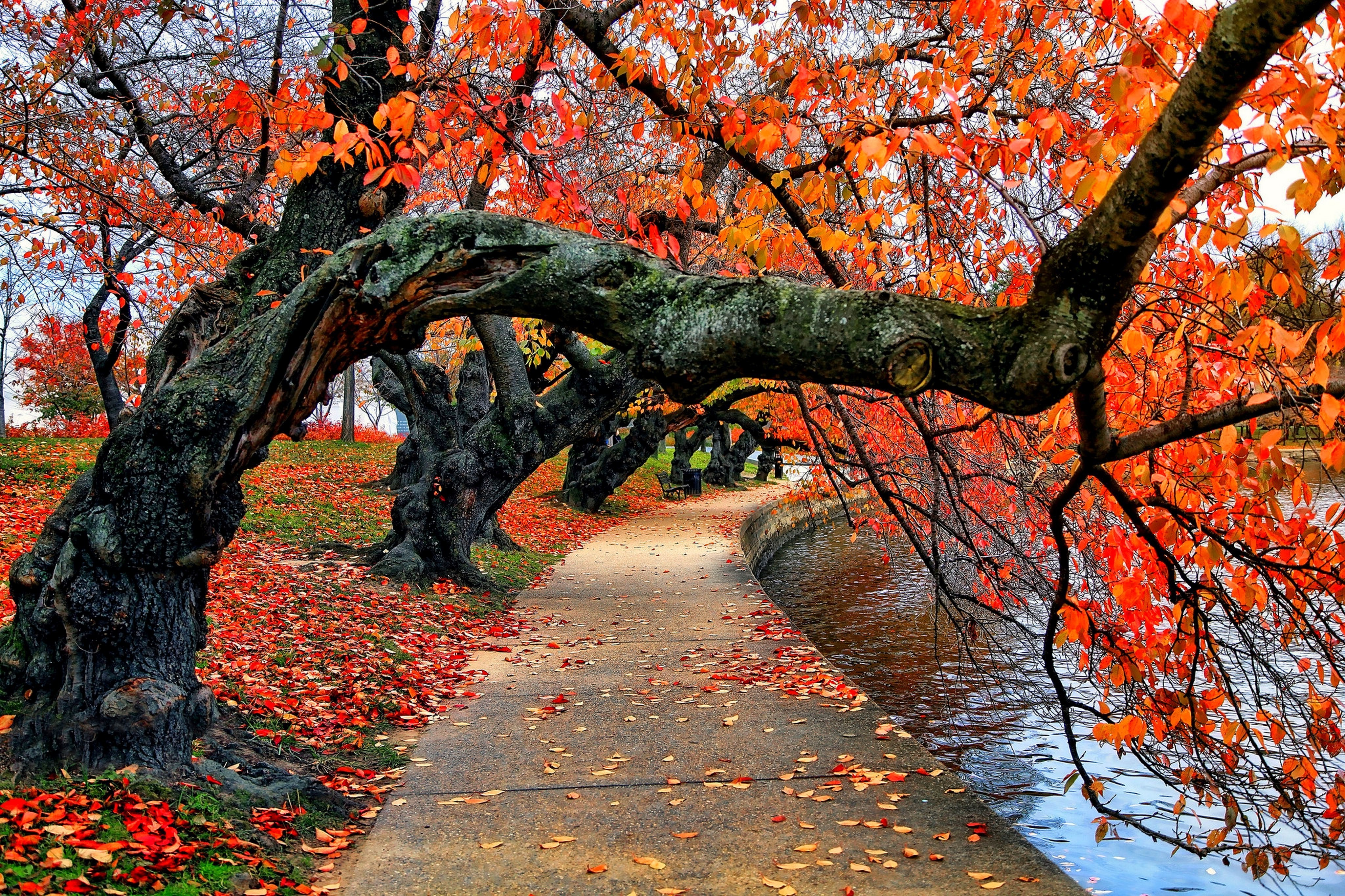 Fall Wallpaper Backgrounds Pumpkins Nature Trees Fall Leaves Red Path Park Water Bench