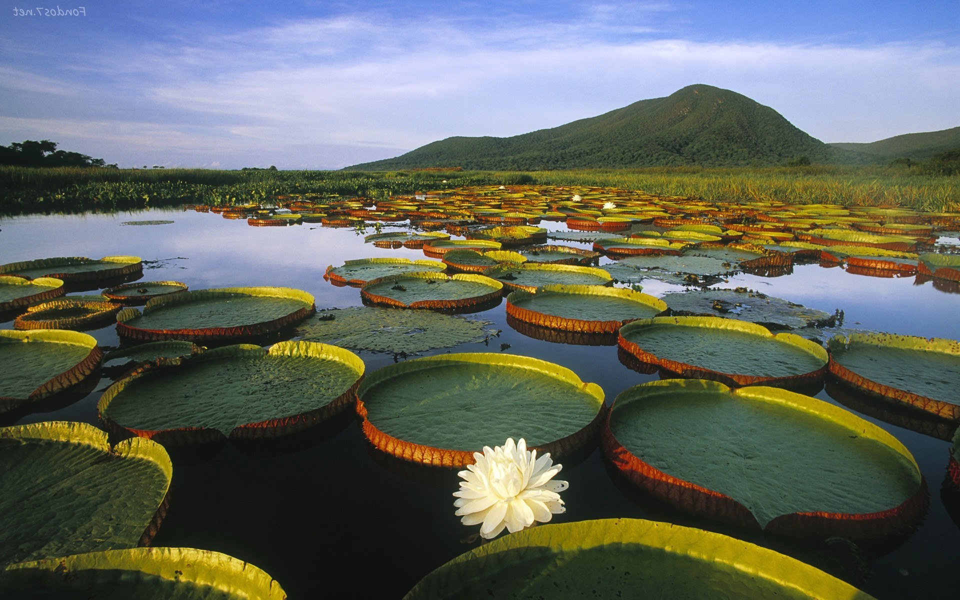 Paisajes Wallpapers Full Hd Lily Pads Water Lilies Lake Hill Landscape Wallpapers