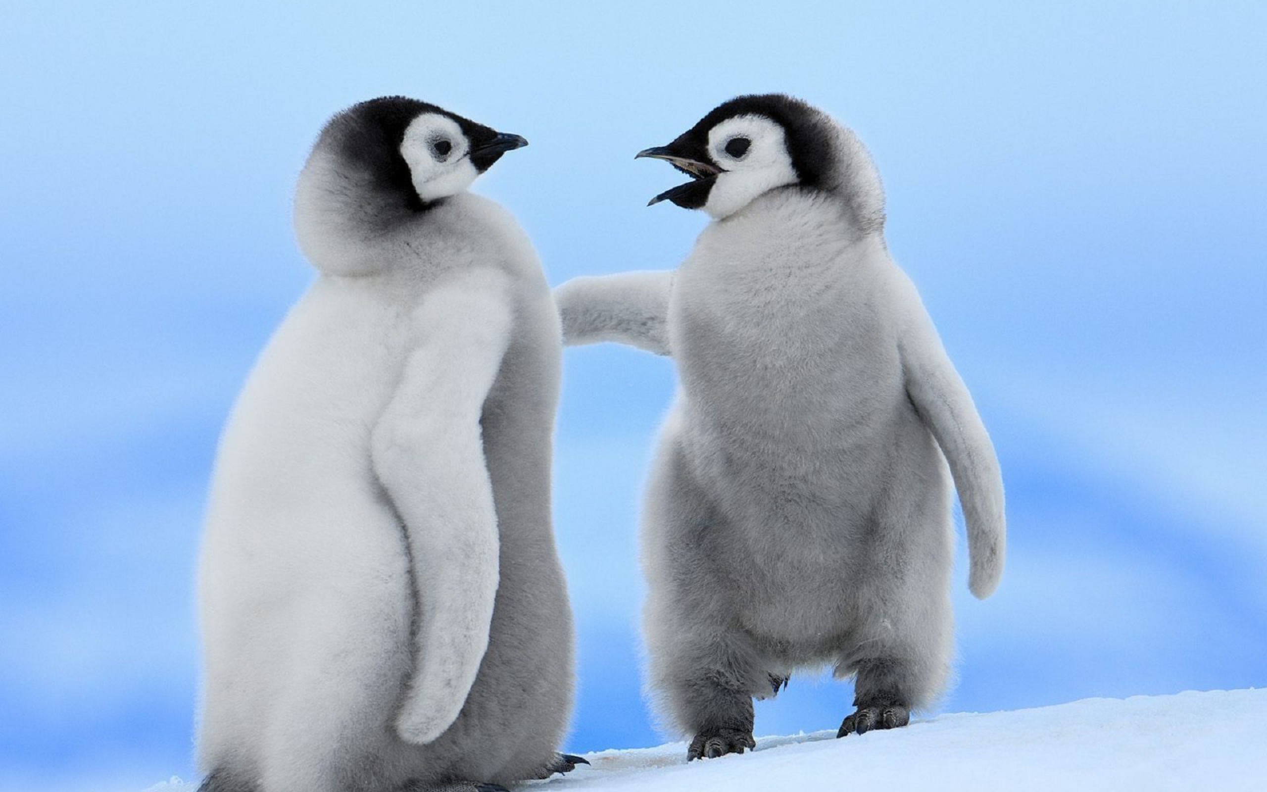 Hd Cute Animal Wallpapers 1080p Animals Birds Penguins Baby Animals Wallpapers Hd