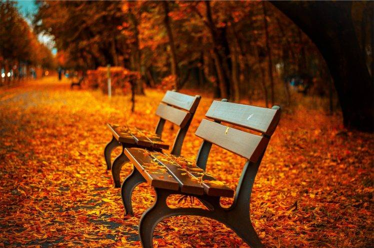 Fall Foliage Wallpaper Screensavers Fall Bench Leaves Depth Of Field Trees Hdr Nature