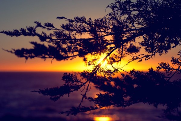 Sunset Horizon Nature Silhouette Branch Wallpapers Hd