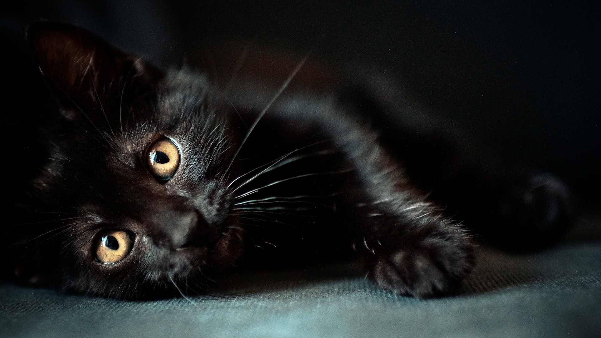 cat, animals, black cats wallpapers hd / desktop and mobile