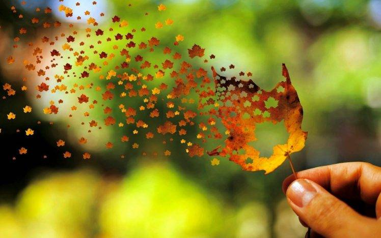Fall In Love Leaf Wallpaper Leaves Fall Depth Of Field Nature Photo Manipulation