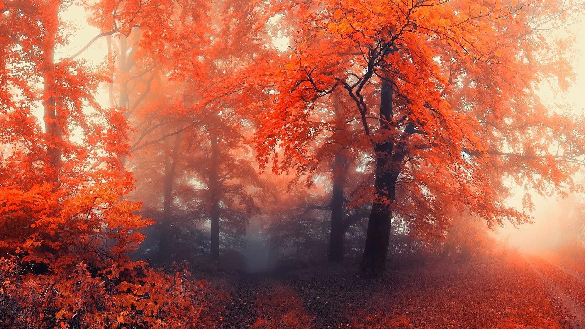 Fall Wallpaper Screensavers Forest Nature Mist Wallpapers Hd Desktop And Mobile