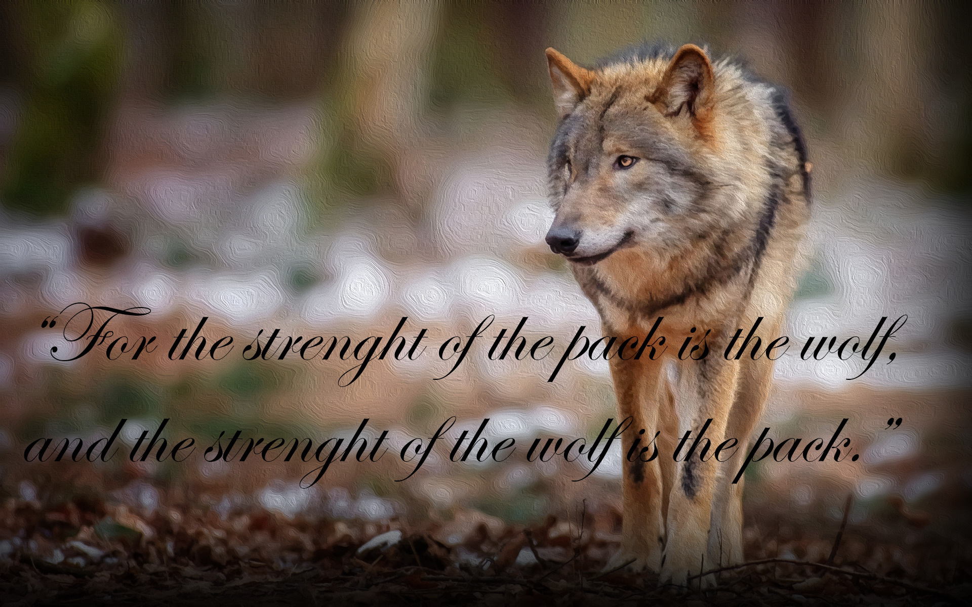 Lone Wolf Quotes Wallpaper Quote Wolf The Jungle Book