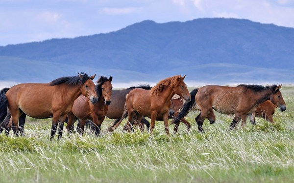 animals horse landscape wallpapers