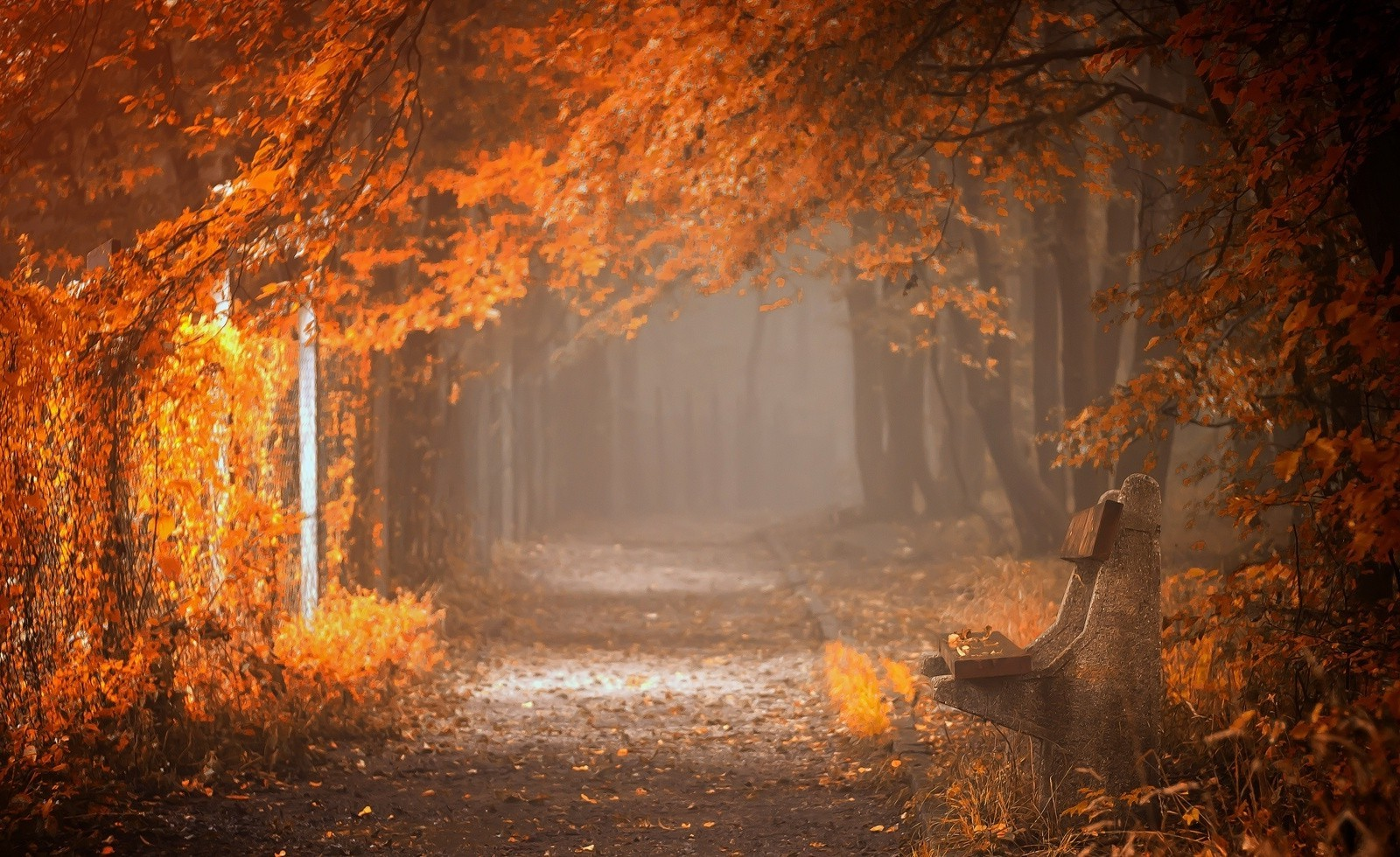 Netherlands Fall Wallpaper Fall Bench Mist Leaves Trees Path Yellow Orange