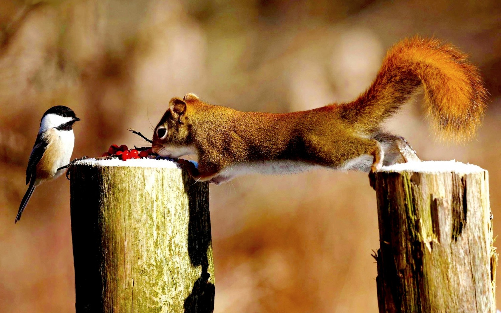 Awesome Animal Wallpapers Animals Squirrel Birds Titmouse Tree Stump Wallpapers