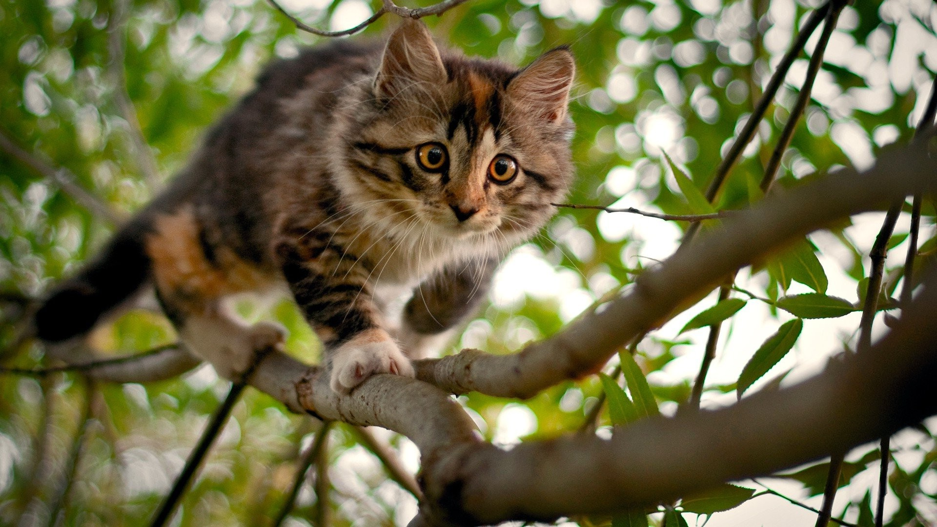 Cute Bengal Wallpapers Hd 1366x768 Nature Cat Wallpapers Hd Desktop And Mobile Backgrounds