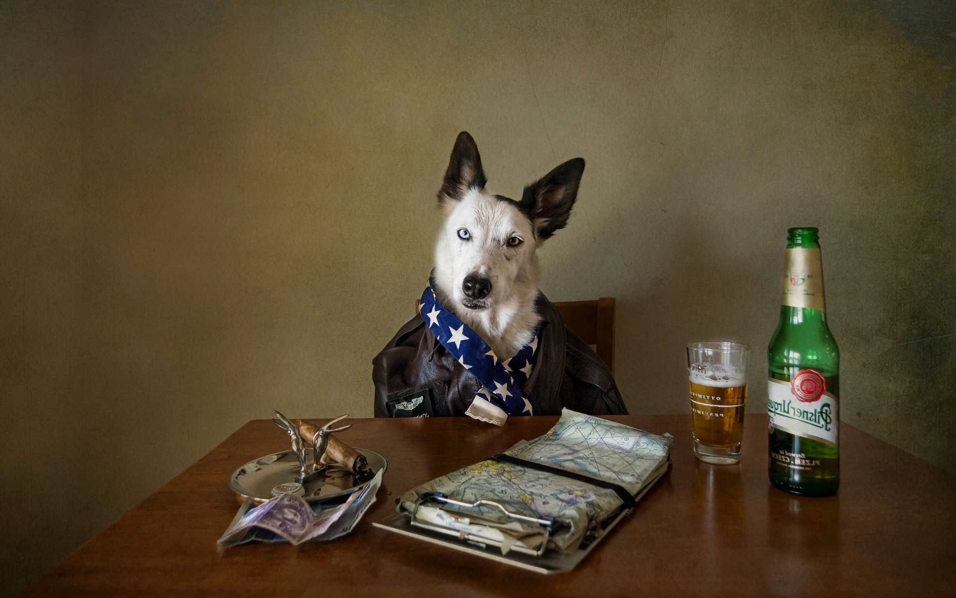 Funny Hd Animal Wallpapers Animals Dog Beer Wallpapers Hd Desktop And Mobile
