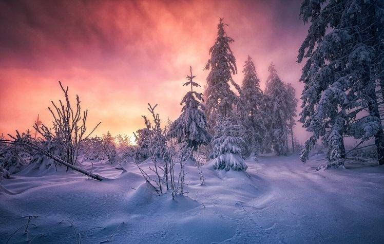 Free Download Snow Falling Animated Wallpaper Forest Winter Sunrise Germany Snow Trees Cold