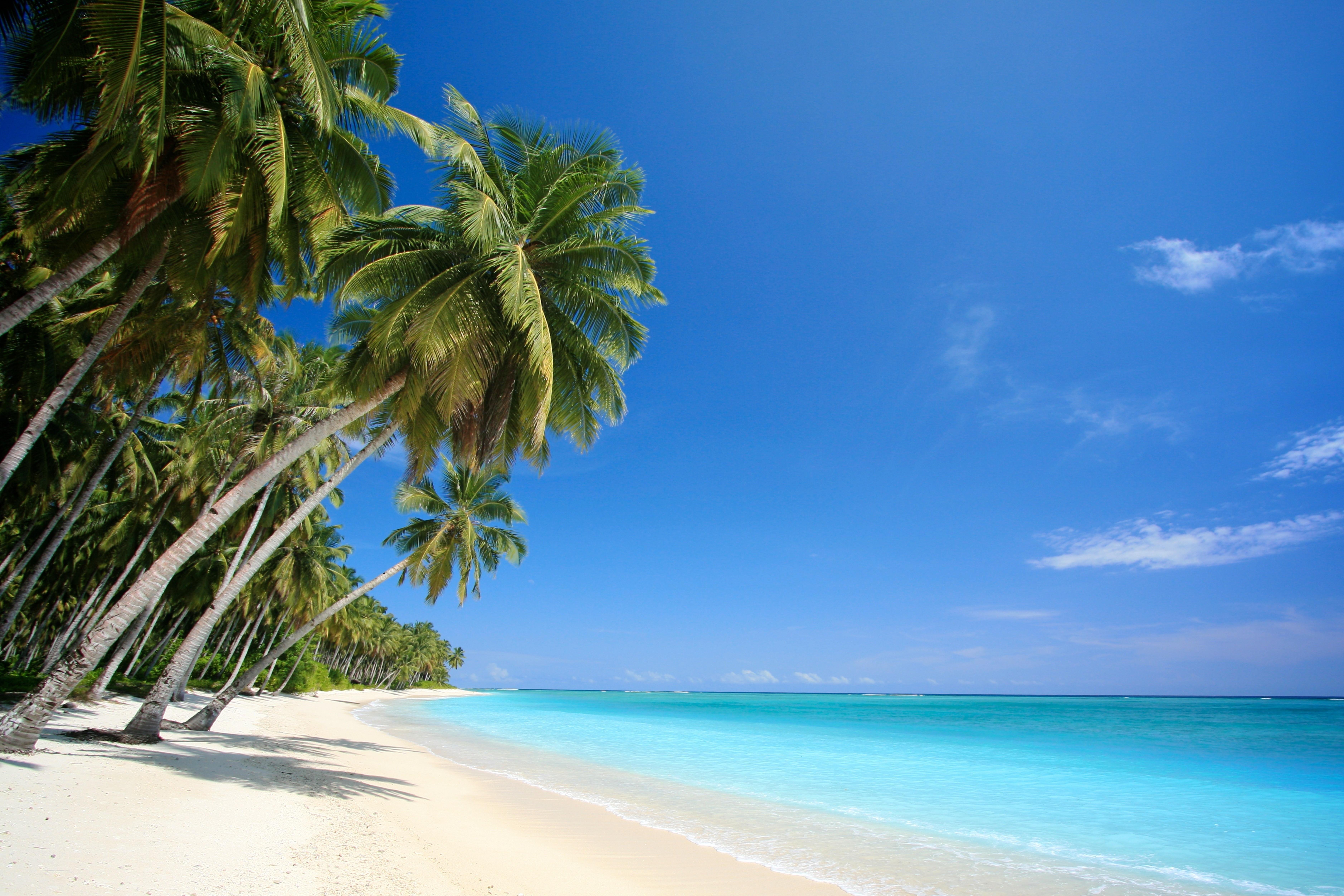 Wallpaper Costa Rica Girls Beach Palm Trees Sea Landscape Nature Wallpapers Hd