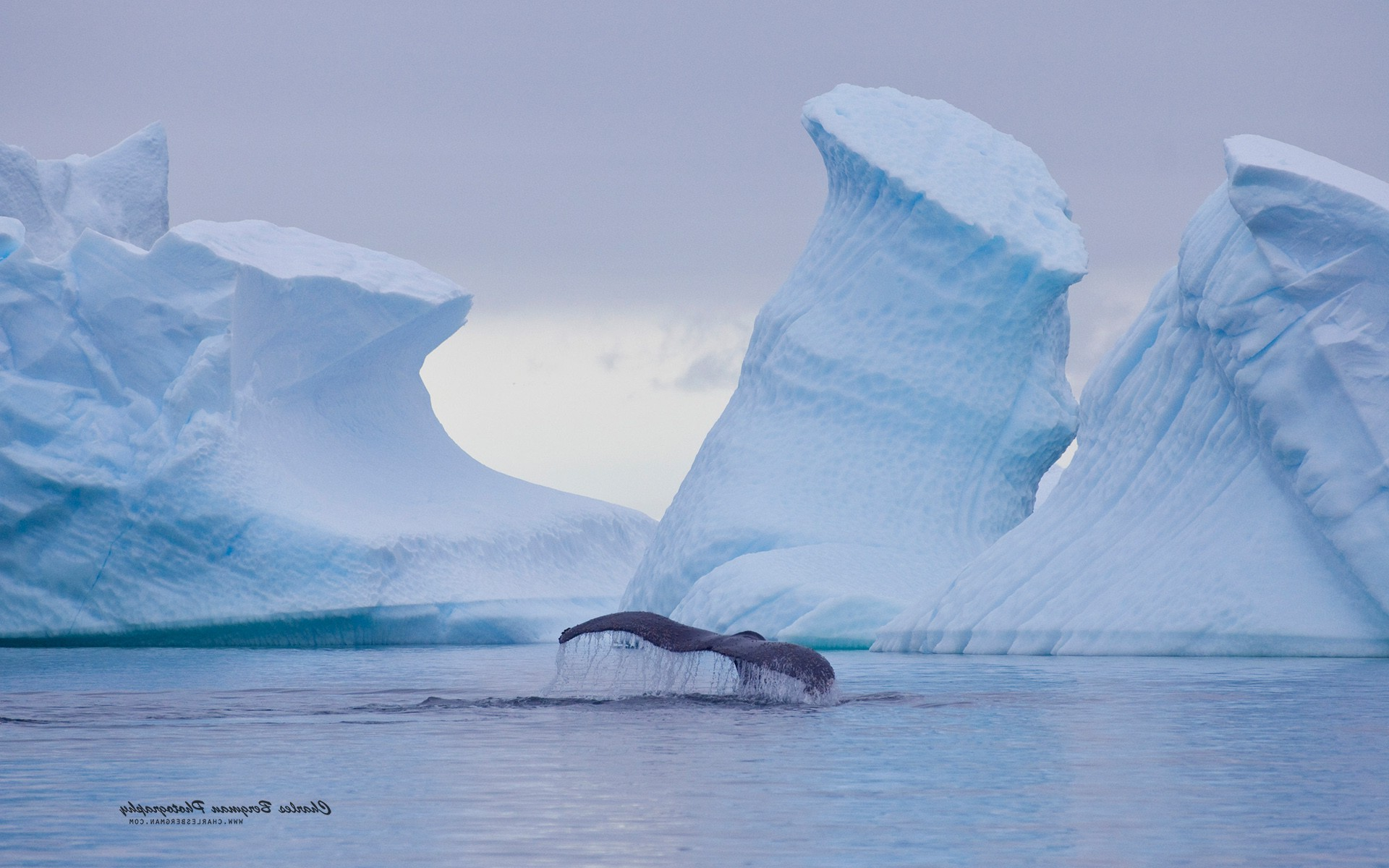 Hd Orca Wallpaper Nature Ice Landscape Animals Whale Iceberg Wallpapers