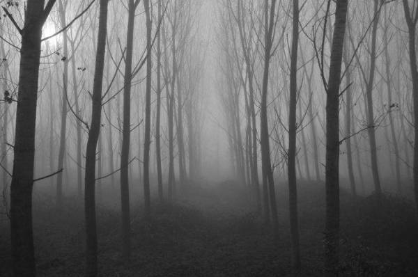 landscape nature spooky wallpapers