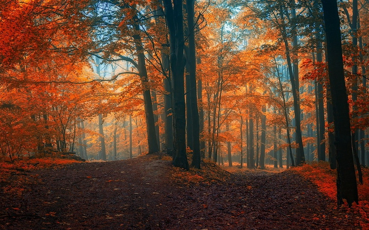 Fall Leaves Hd Mobile Wallpaper Landscape Nature Fall Path Forest Crossroads Leaves