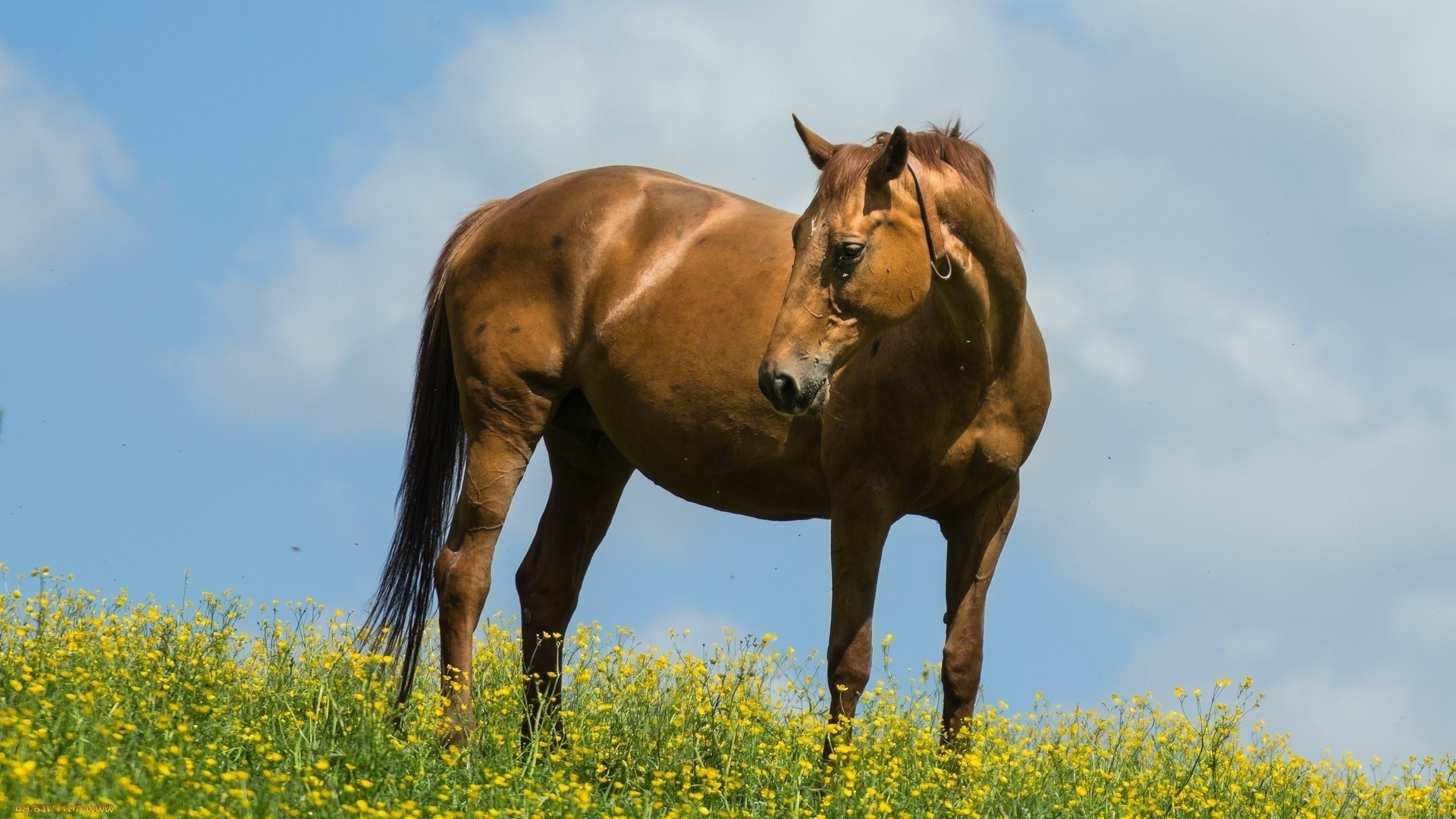 Animal Wallpaper Full Hd Animals Horse Yellow Flowers Wallpapers Hd Desktop And