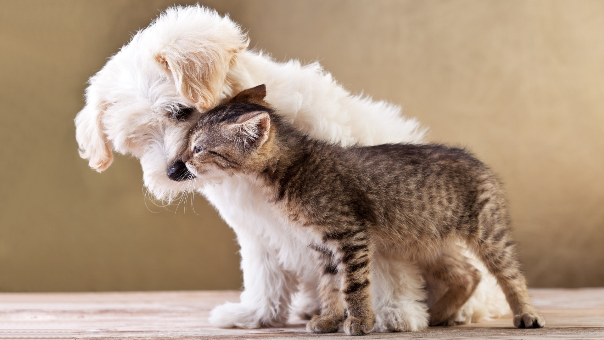 nature, animals, dog, cat, baby animals, kittens, pet, love