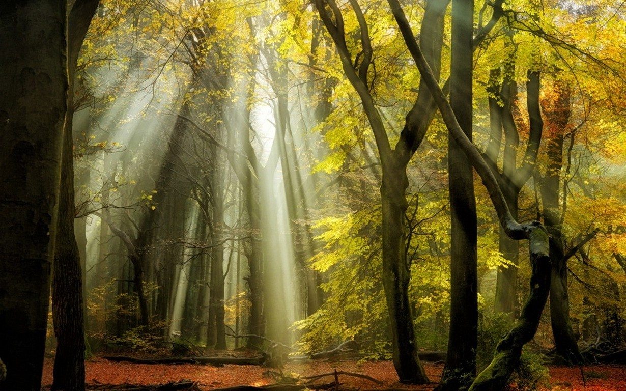 3d Fall Wallpaper Nature Landscape Sunbeams Forest Fall Leaves Trees