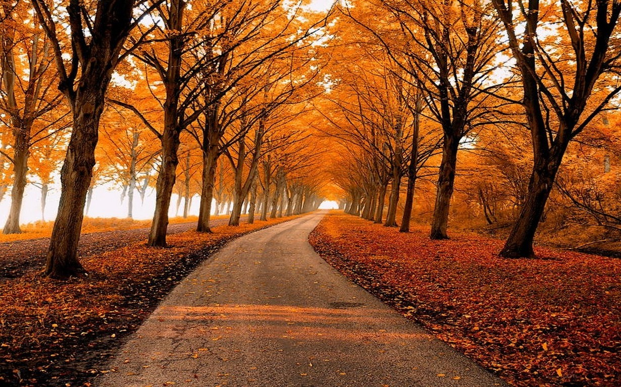 Fall Leaves Wallpaper Powerpoint Background Fall Park Leaves Nature Path Trees Landscape Gold