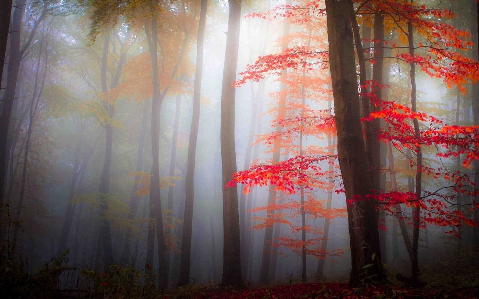Forest Animal Wallpaper Nature Landscape Mist Forest Fall Leaves Trees
