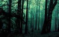 forest, Landscape, Dark, Nature, Trees, Photo Manipulation