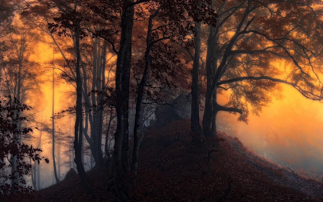Full Screen Desktop Fall Leaves Wallpaper Nature Landscape Sunrise Mist Forest Leaves Trees