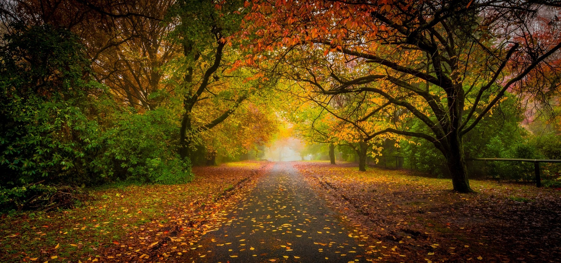 Nature Wallpaper Autumn Fall 1600x1200 Nature Landscape Road Fall Leaves Mist Trees Tunnel