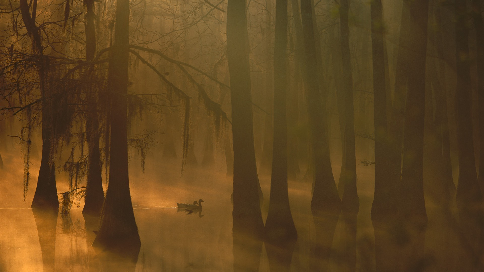 Foggy Fall Wallpaper Nature Trees Forest Leaves Water Lake Mist Morning