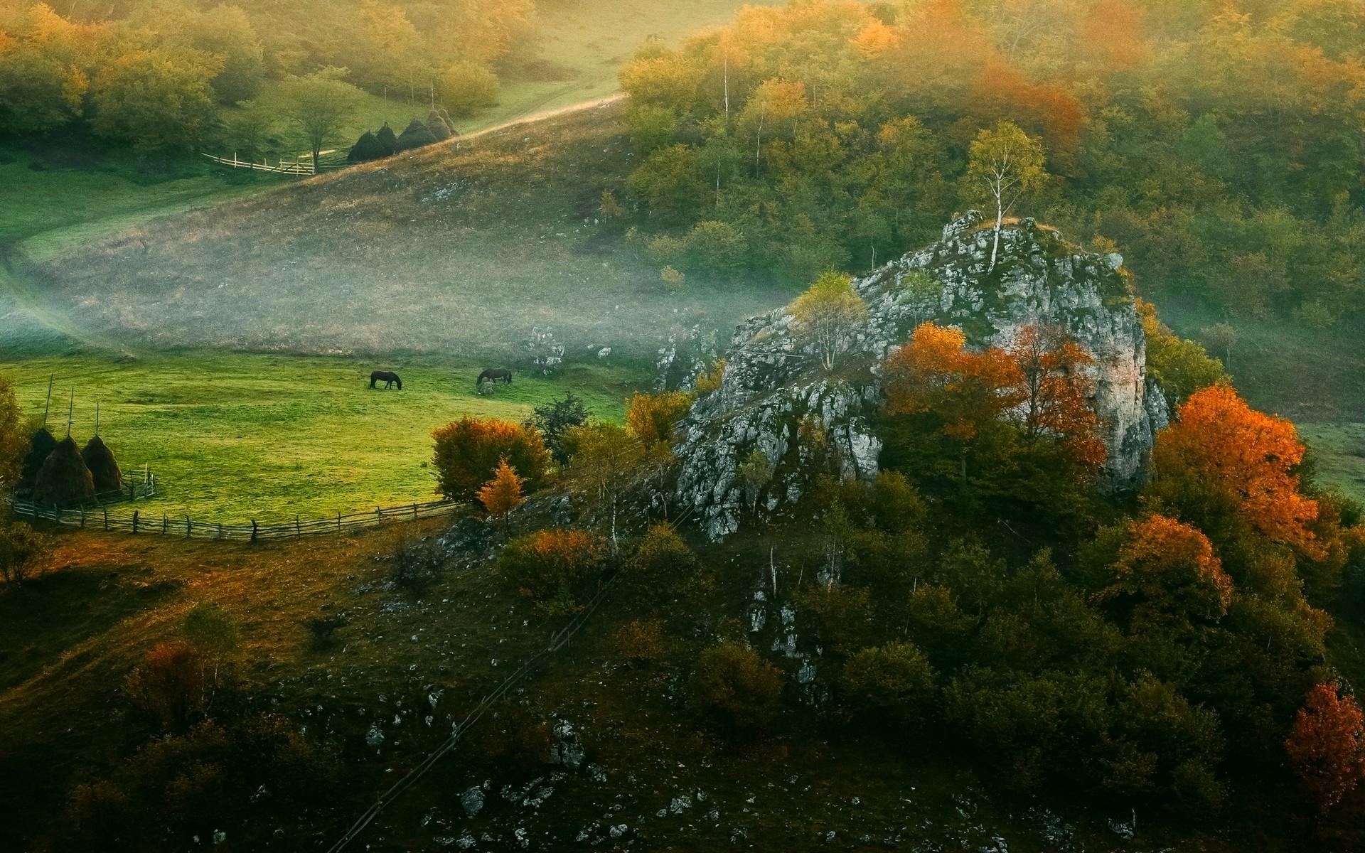 Full Screen Desktop Fall Leaves Wallpaper Landscape Nature Mist Sunrise Fall Forest Fence