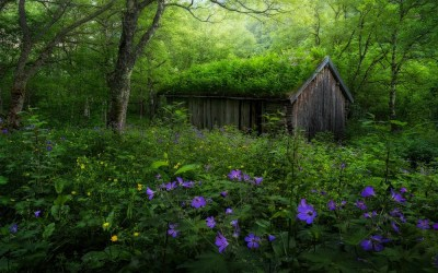 forest purple spring landscape wildflowers nature norway hut yellow trees abandoned wallpapers desktop hd backgrounds shrubs mobile wallup awesome re