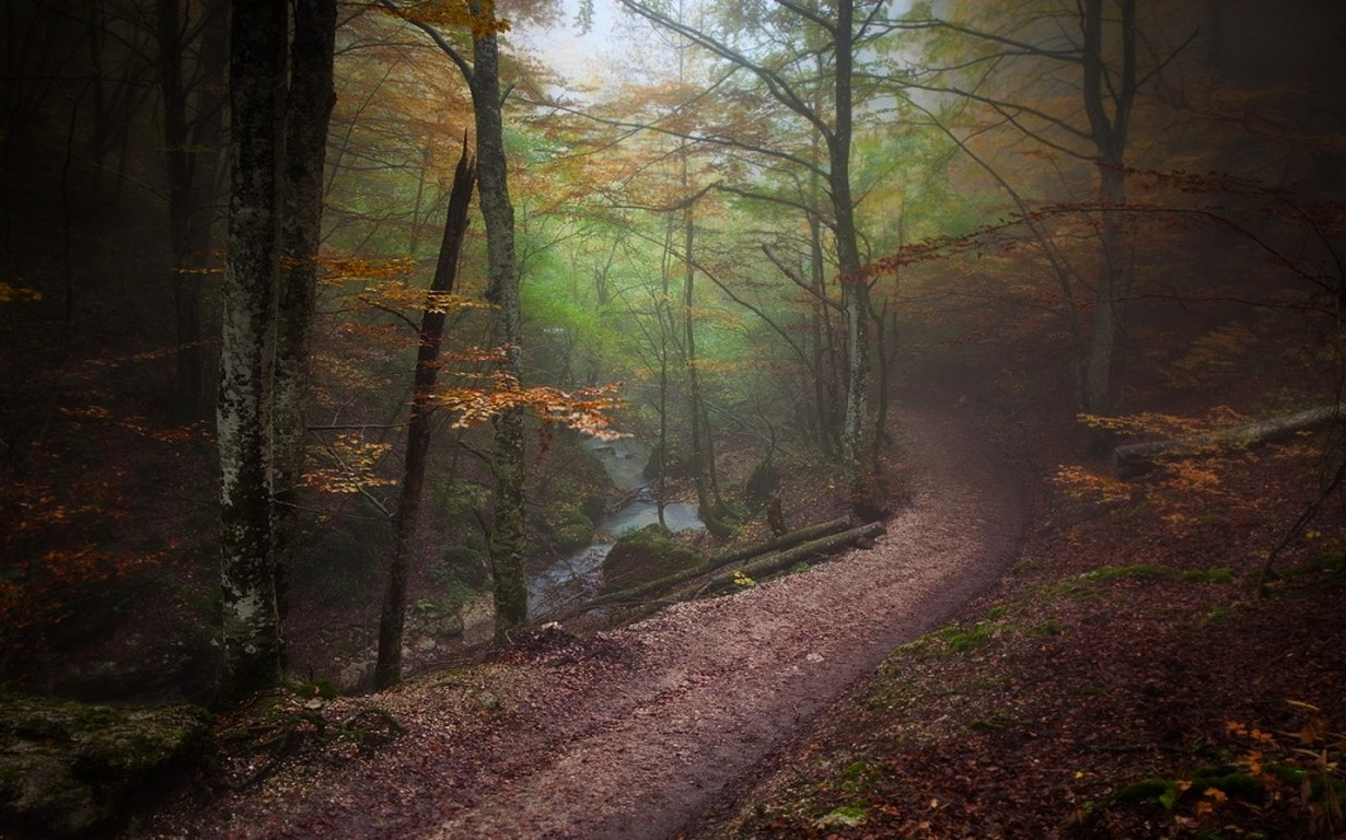 Fall In Love Wallpaper Landscape Nature Forest Path Fall Mist Trees River