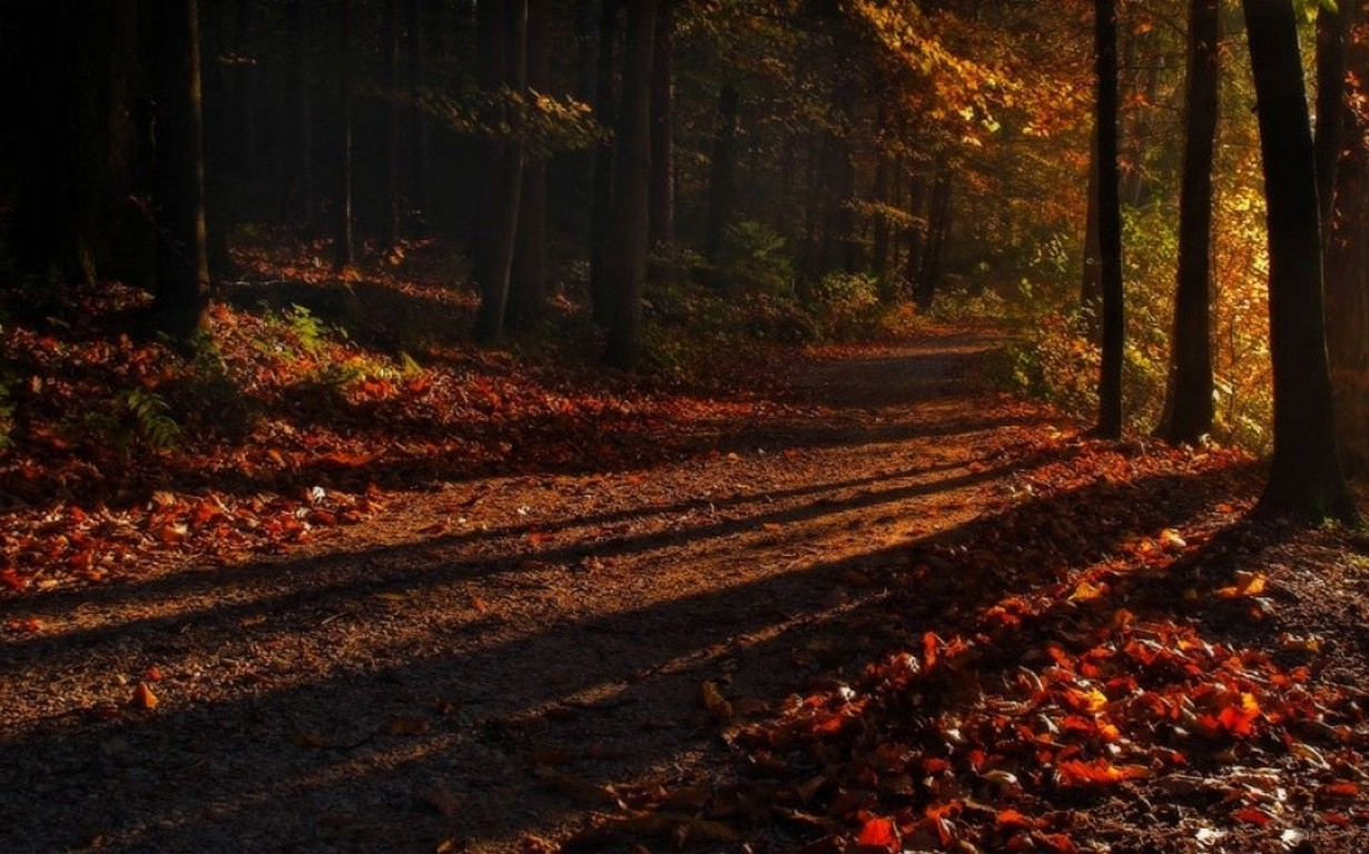 Full Screen Desktop Fall Leaves Wallpaper Shadow Forest Sunrise Path Leaves Fall Trees Nature