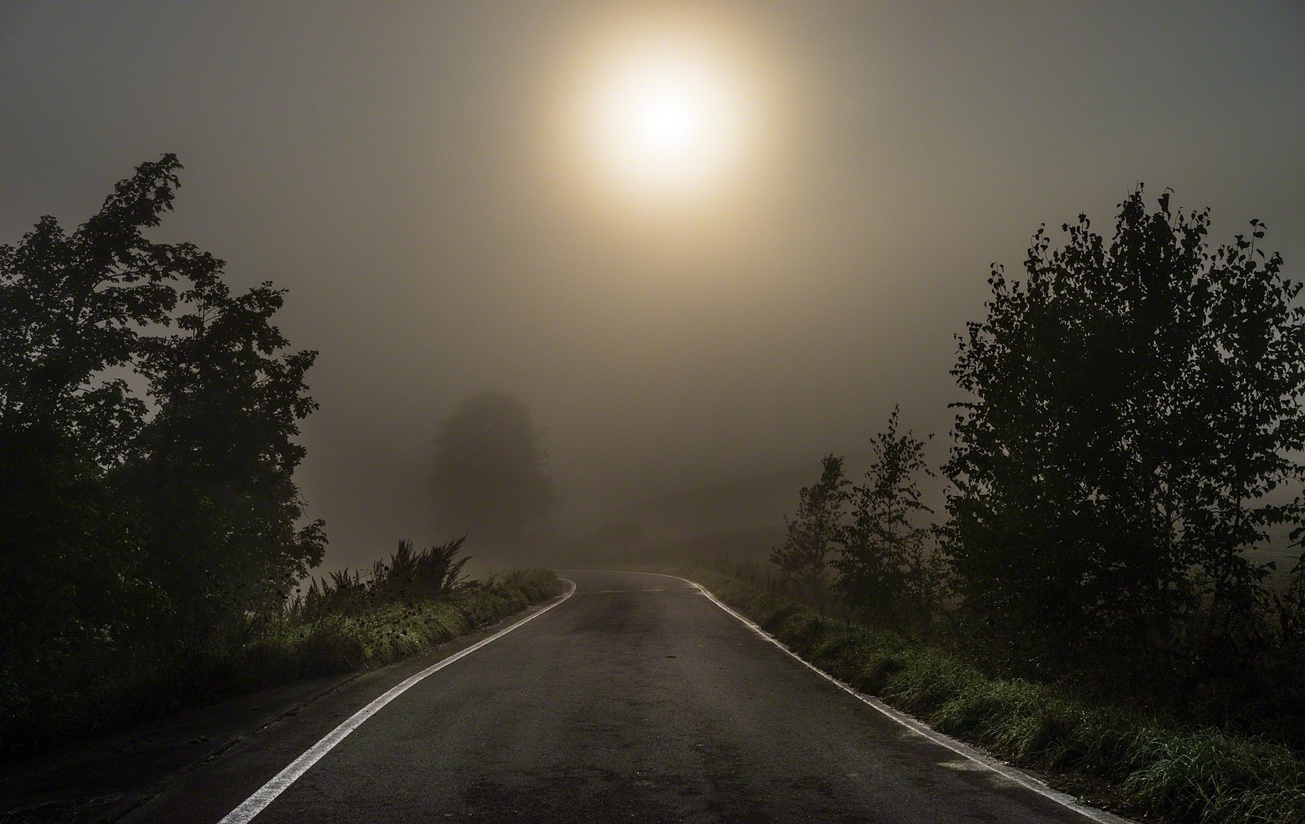 Funny Hd Animal Wallpapers Nature Landscape Mist Morning Road Trees Dark